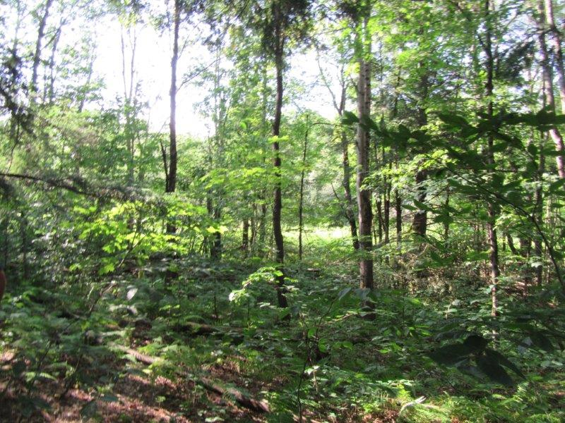 7.2 acres land for sale. Tug Hill Base Camp Building Lot!