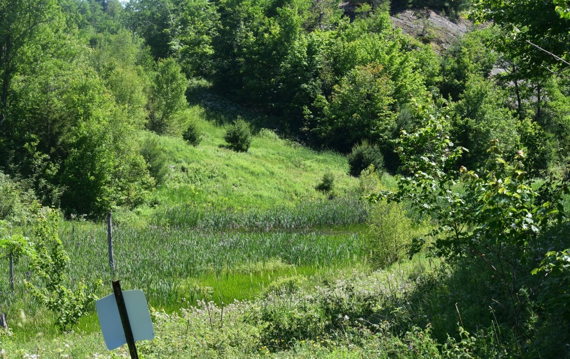 Home of Trophy bucks! This North Country Hunting property is a great Land Deal!