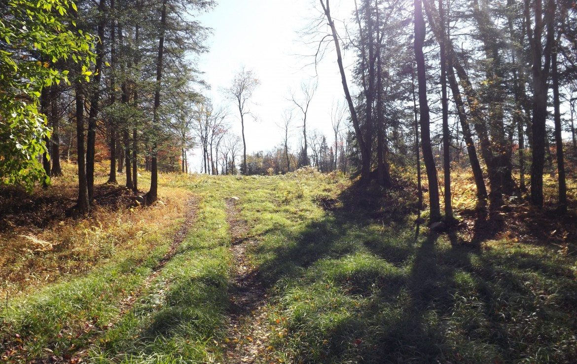 Hunting land for sale is a great Land Deal NY