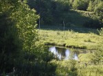 Hunting Land for sale with Pond