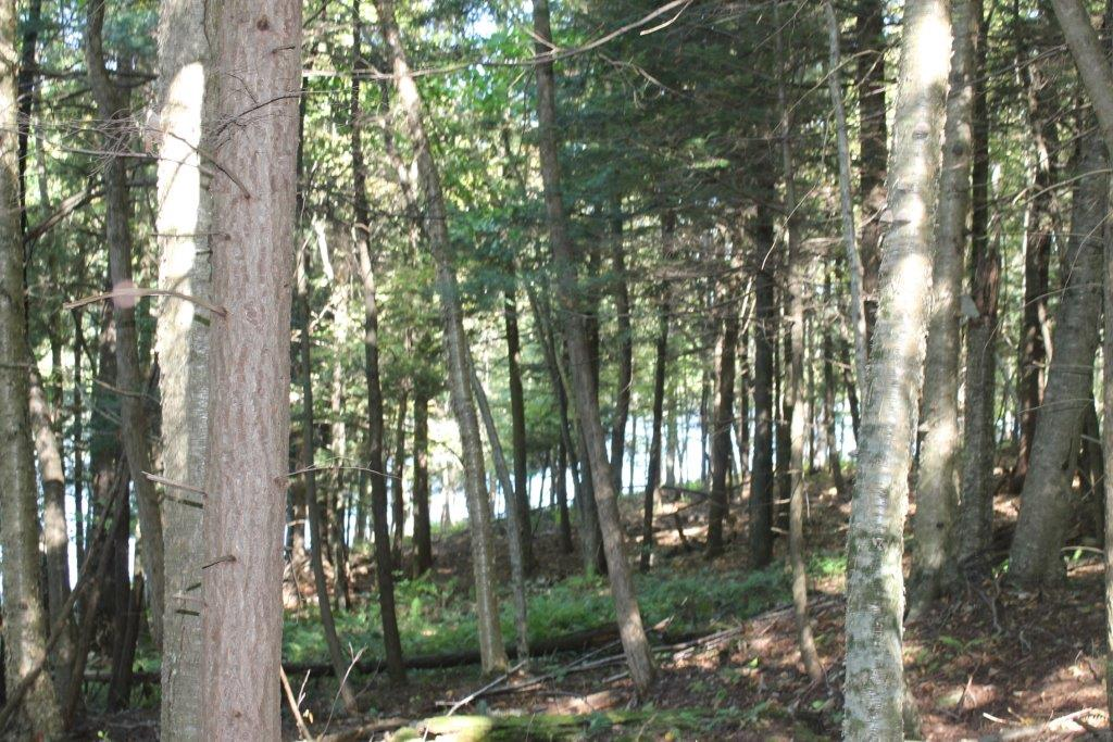 Woods and pond land for sale