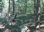 wooded acreage hermon ny
