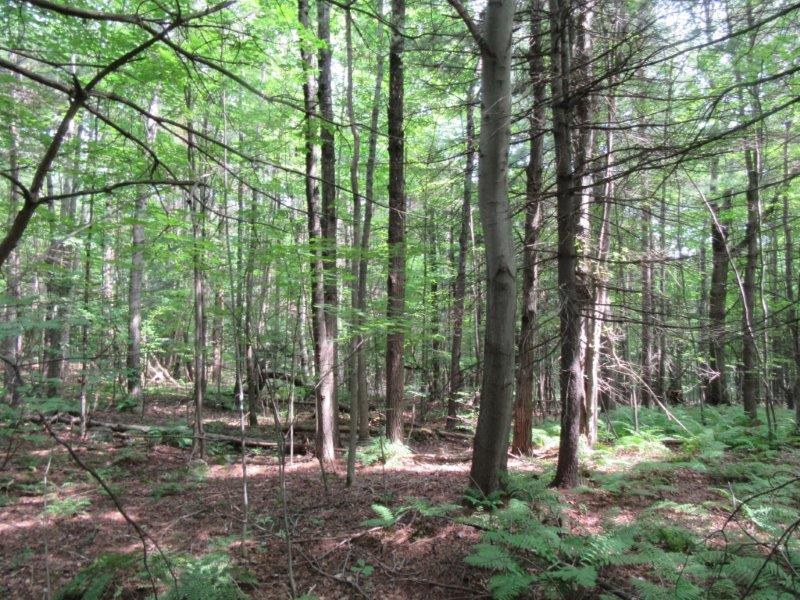 Wooded Hunting Land for sale NY