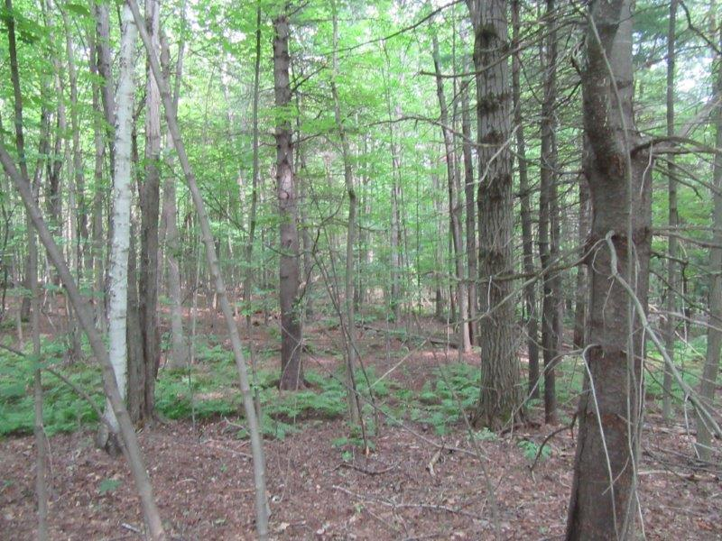 Woods Hunting Land near State Forest