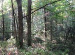 2 acres land bordering state forest for sale NY
