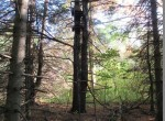 2 acre cabin building site for sale Marshall NY