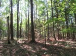 Hunting Land for sale bordering state land NY