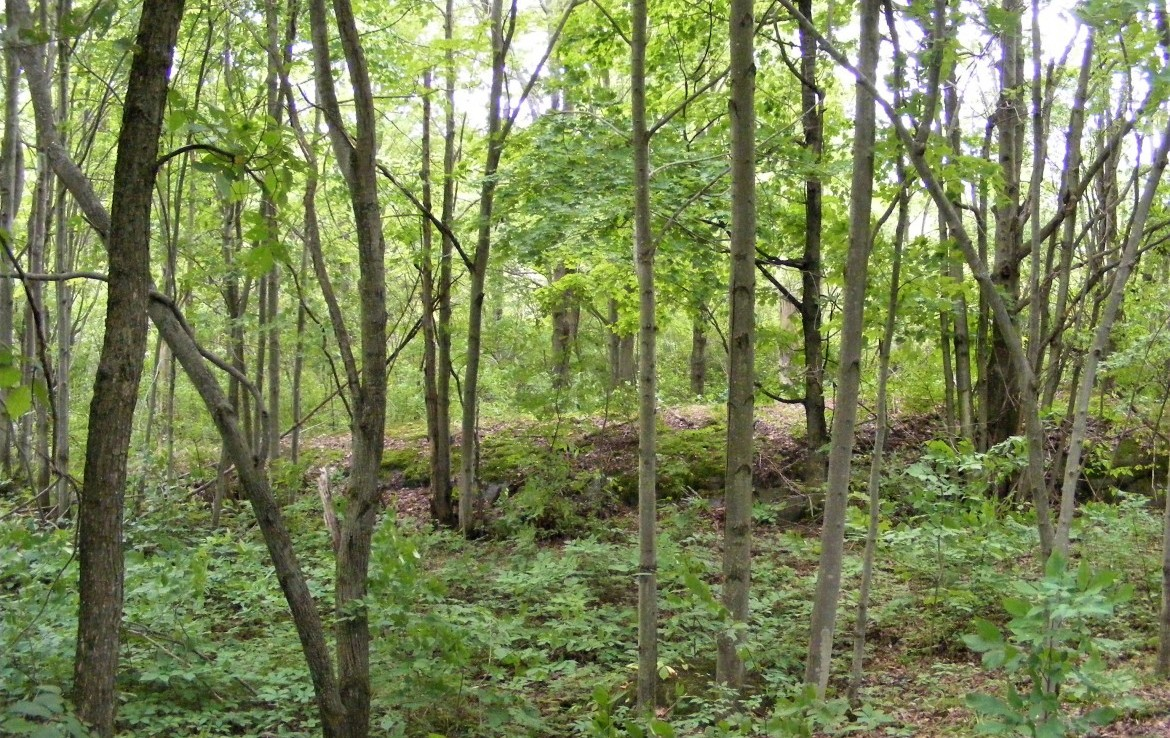 176 acres Hobby Farm and Hunting Tract Antwerp NY