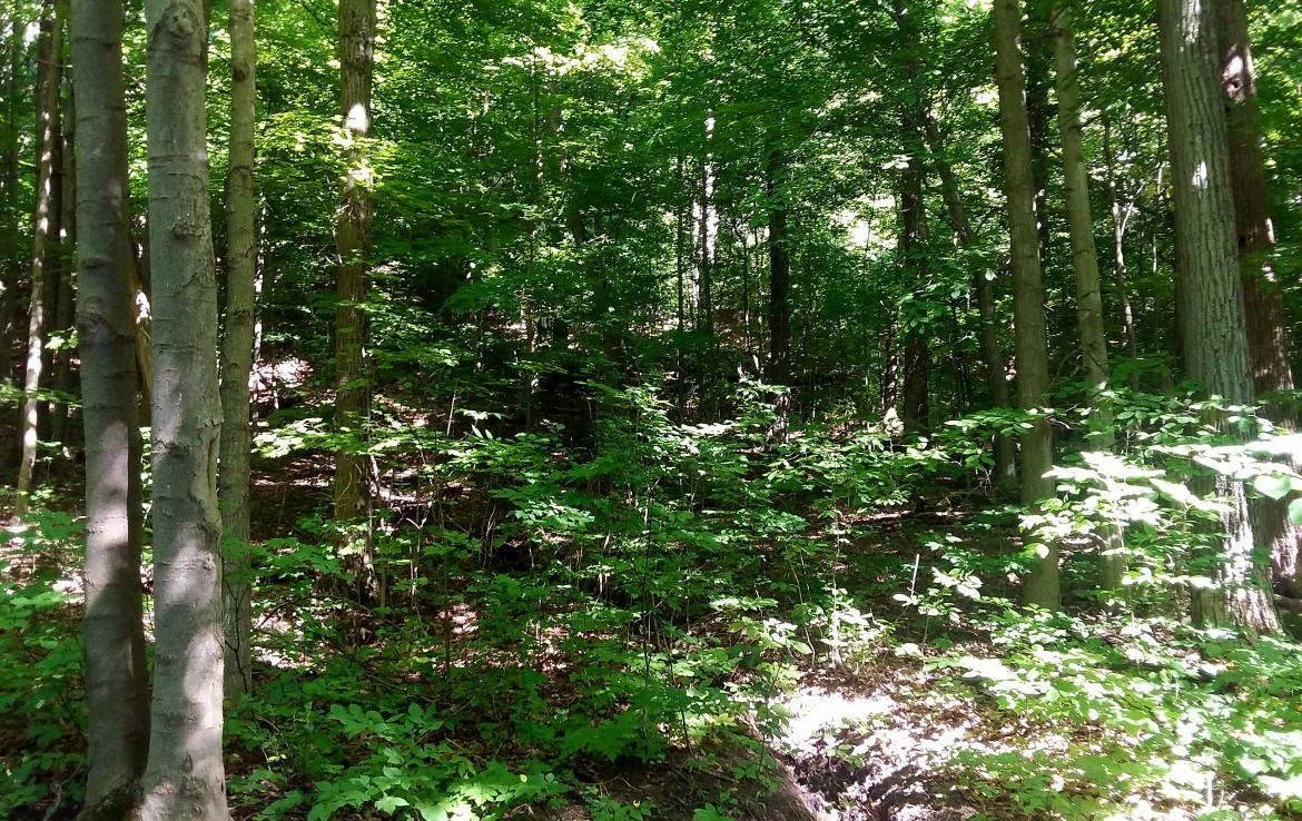 45 acres Wooded Building Tract Georgetown NY