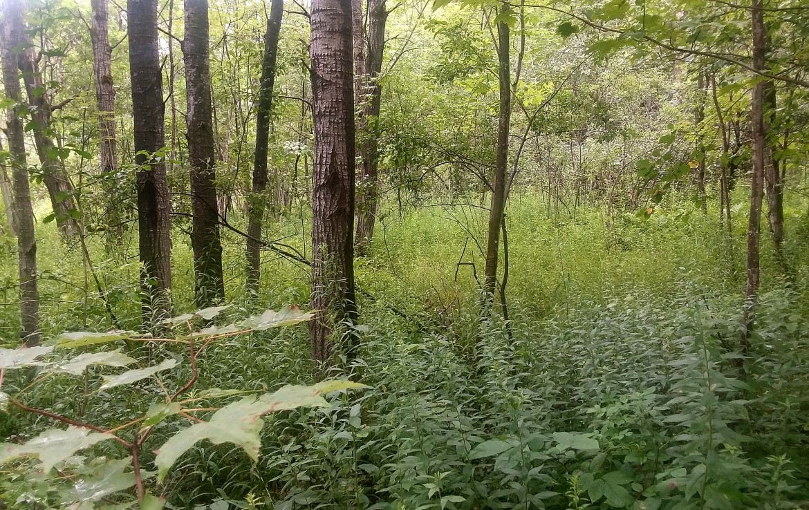 Texas Hill State Forest is just around the corner with 45 acres of hard woods, soft woods, pines and scrub apples