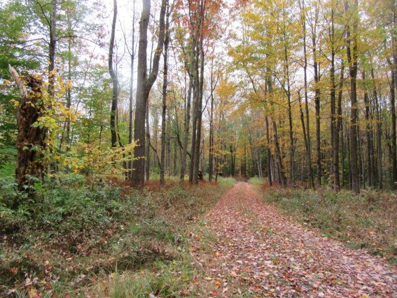 Northern Zone Hunting Land for sale ny