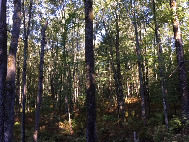 land for sale with woods and fields ny