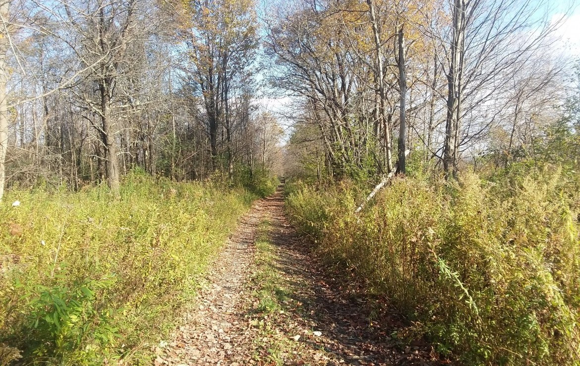 Prime Hunting Land for sale Deerfield NY