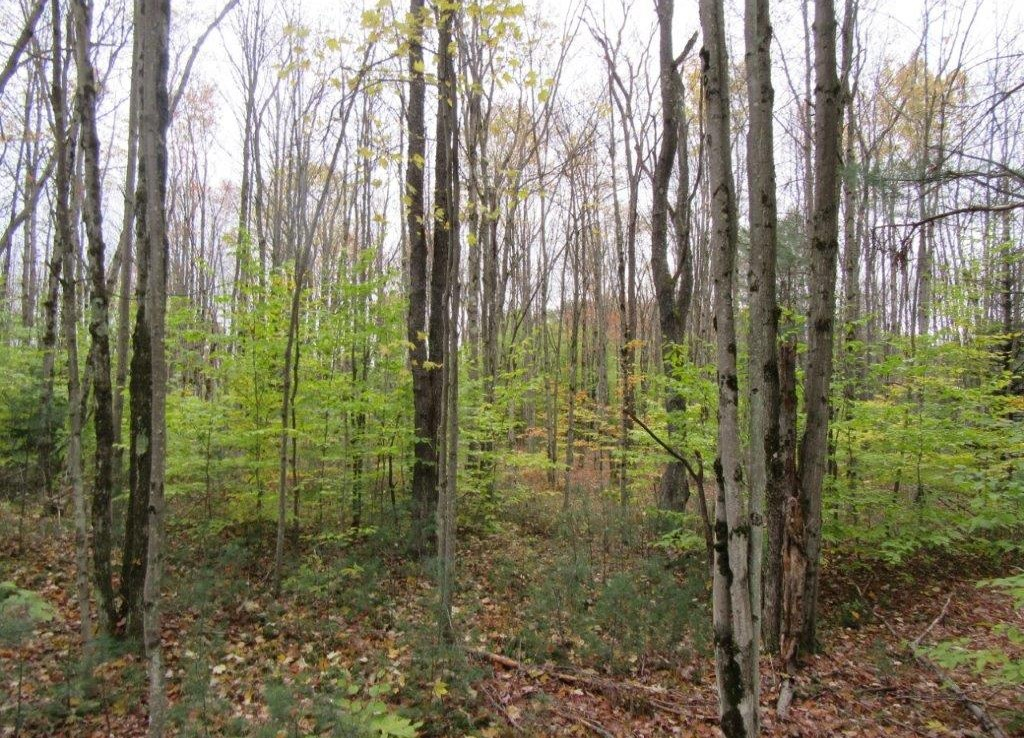 hunting land for sale with pristine woodlands