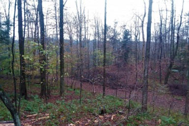 Hunting Land for sale Bordering State Land Pharsalia NY