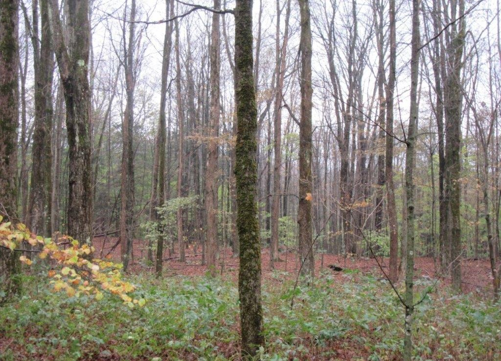 Bordering Pharsalia Woods State Forest Land for sale