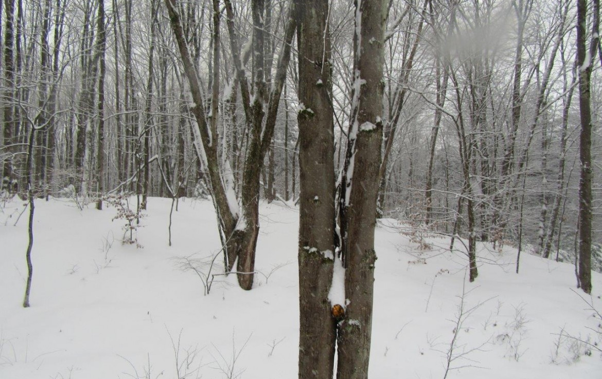 Wooded winter land for sale in Amboy NY