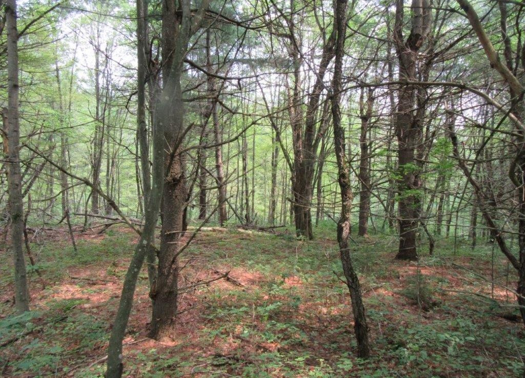 Land and cabin for sale upstate ny