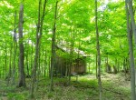 312 acre Hunting Land for sale with a cozy cabin, spring-fed pond, and Marketable timber!