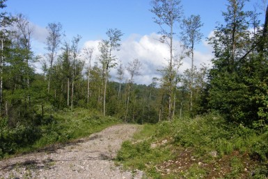 175 acres Hunting Land near Adirondacks