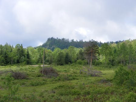 175 acres land for sale in Parishville, NY.