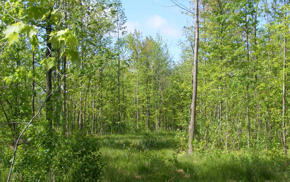 33 acres of land for sale St. Lawrence County