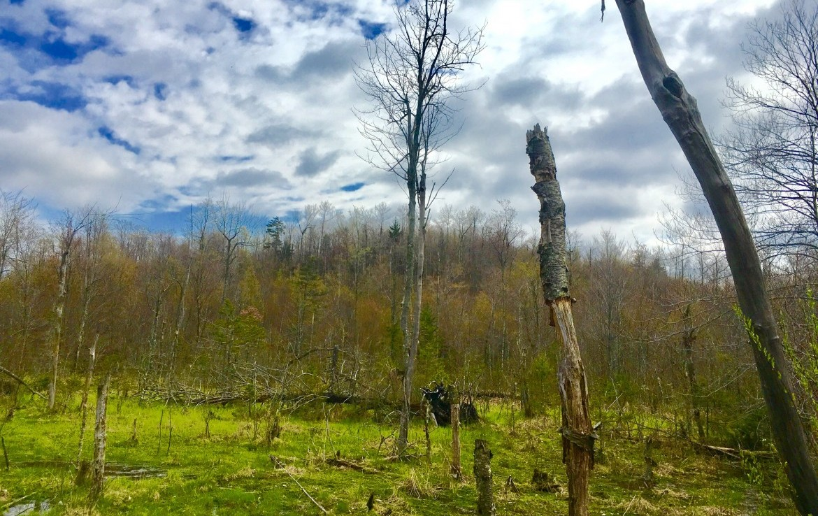 90 acres Hunting Land for sale in Parishville, NY!