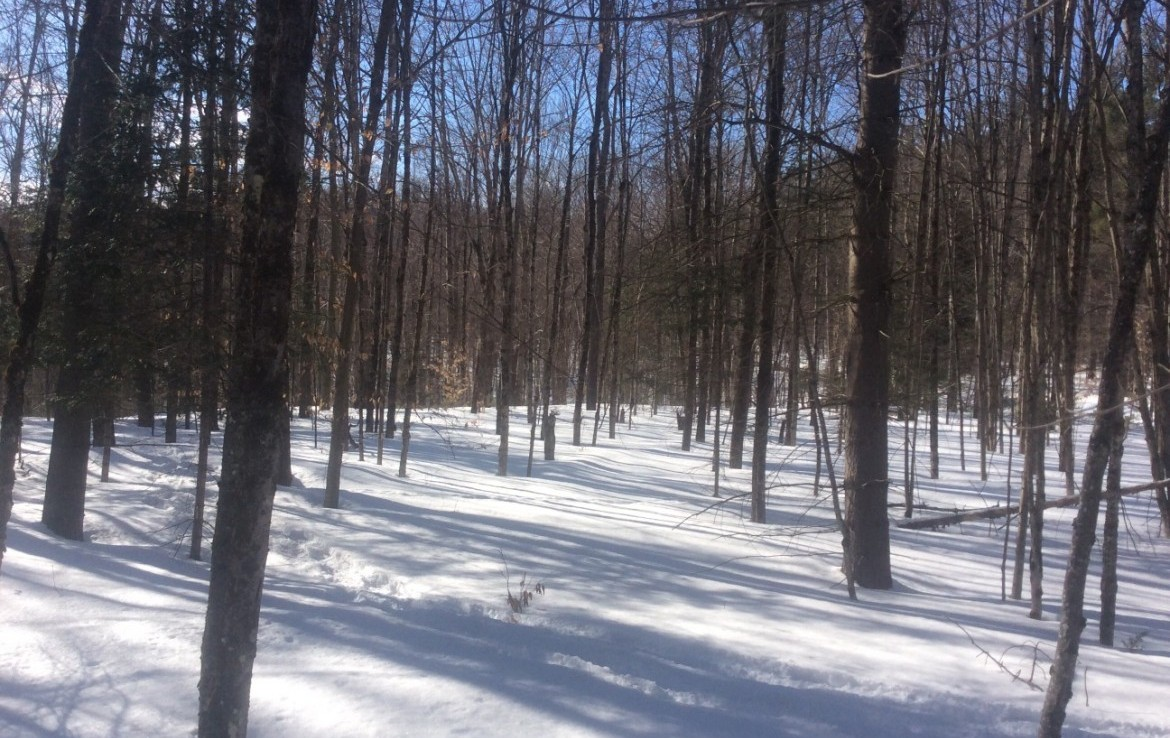 8.77 acre year-round hunting land and woodland hideaway for sale!