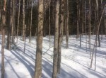 8.77 acre hunting land and woodland hideaway