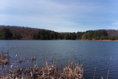 27 acres Hunting Land and Pond Lebanon NY