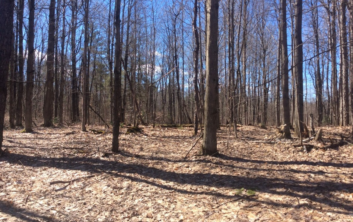 99 acres Hunting Land for sale near State Forest and along ATV Trails!