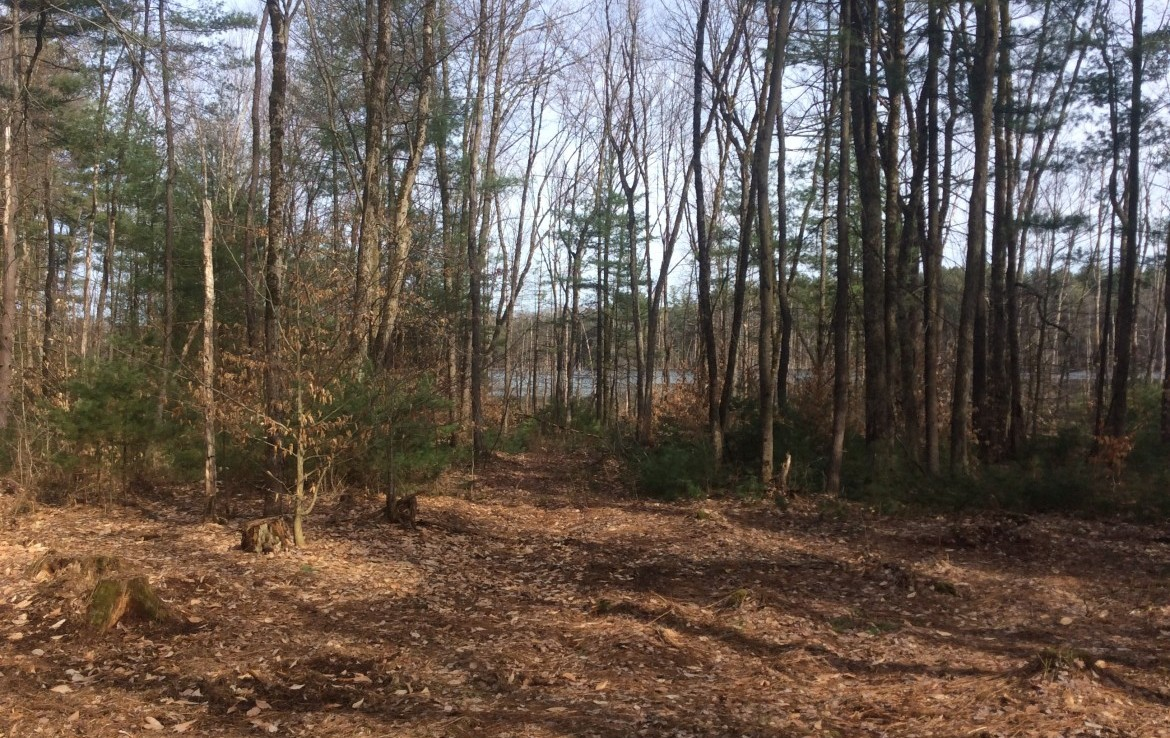Sportsman's Paradise just inside Northern Hunting Zone with deer, ducks and bass pond