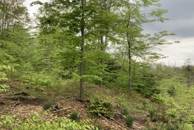 25 acres Hunting land Constantia NY