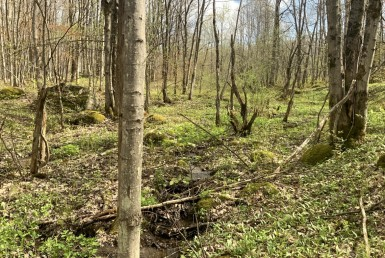 12 acres Northern Hunting Land Steuben NY