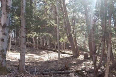 18 acres Building and Hunting Land Nelson NY