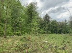 25 acres Hunting Land for Sale near Oneida Lake and Stone Barn State Forest in Constantia, NY!