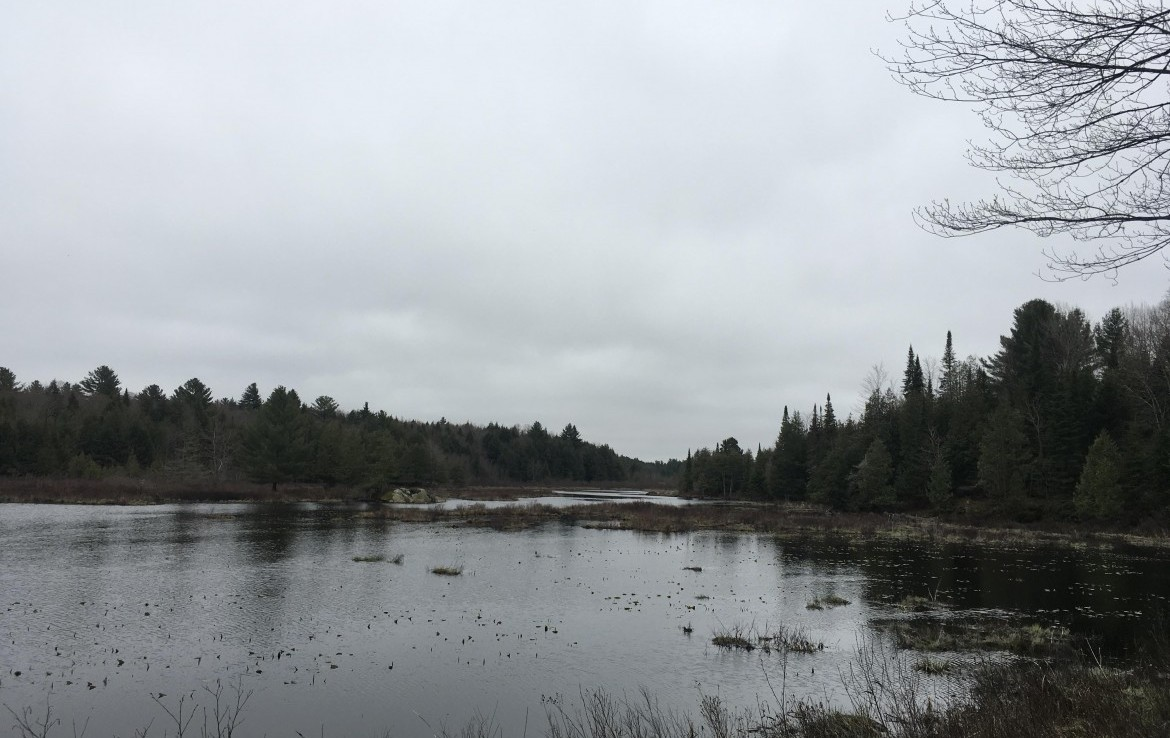 Beautiful sportsmen's retreat for sale, ideal property for hunting or fishing in Lewis County.