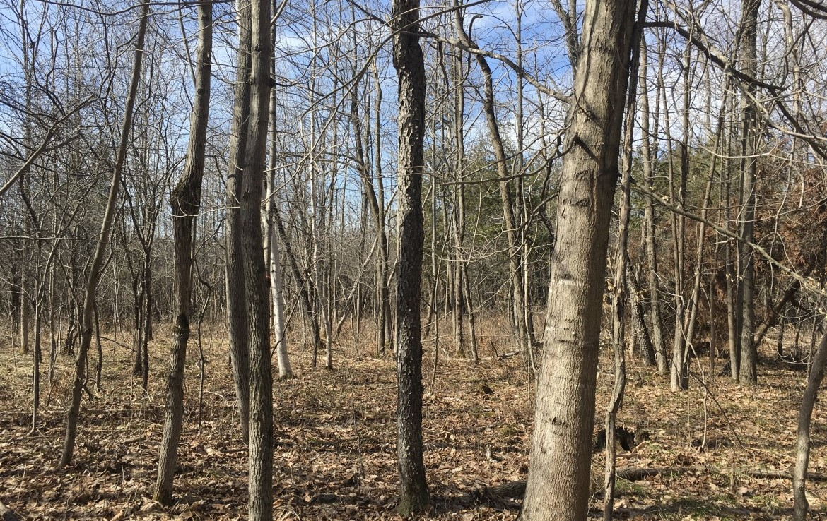 50 acre lot close to thousands of acres of state land in St. Lawrence County!