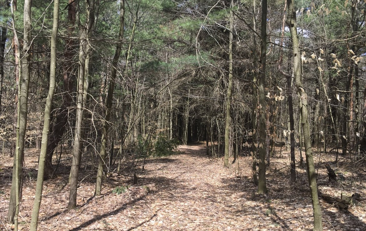 70 acres Hunting Land and Camp for sale in Hopkinton, NY!