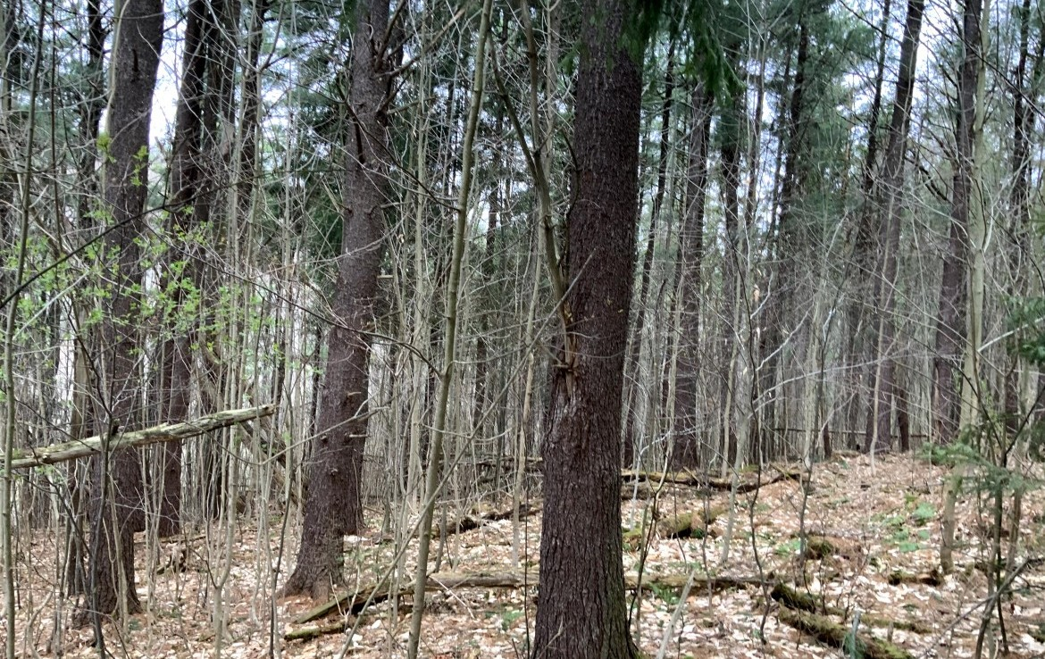 This secluded 10 acre parcel of land is the perfect hunting tract as it's off the abanded old route 80 in Georgetown.