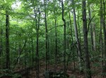 4 acres Bordering Adirondacks near Old Forge