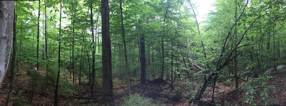 3.89 acres land for sale bordering Adirondack Wilderness in Webb, NY!