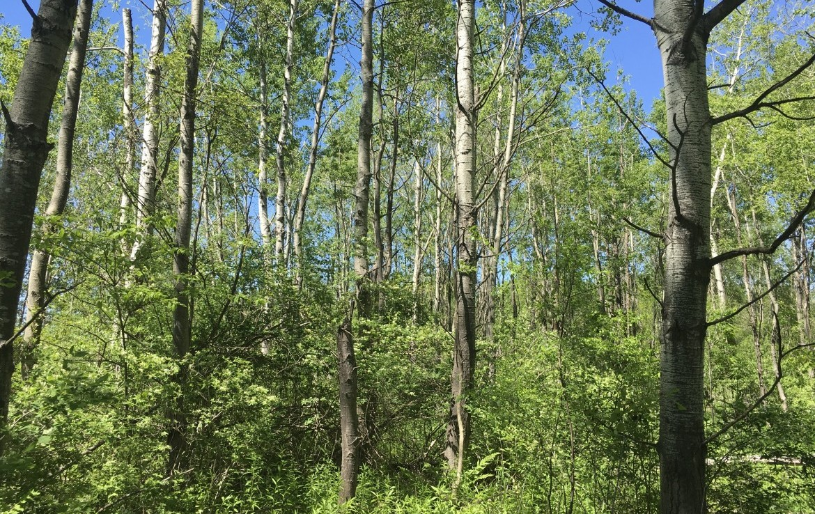 11 acres Country land for sale, that is a great Building Lot in Rutland, NY!