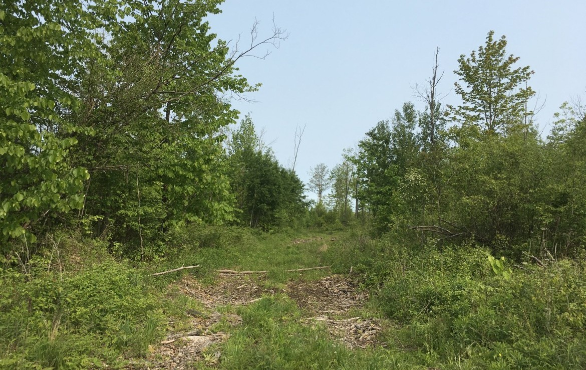 47.8 acres Hunting Land and Building Lot with a cleared site in Norfolk, St. Lawrence County, NY!