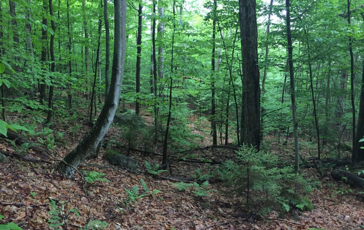 Adirondack's land For Sale with utilities available at the road and snowmobile trail frontage.