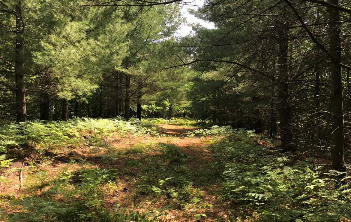 45 acres Hunting Land for sale in Bombay, NY!
