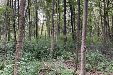 8 acres Buildable Hunting Land Pulaski NY
