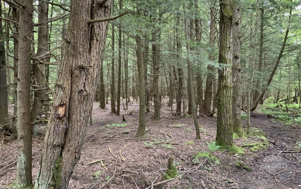8.1 acres land for sale that is perfect for hunting/fishing camp that touches Oswego County ATV trail!