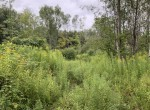 8.1 acres within 5 minutes of Pulaski, NY where you can catch trophy salmon and steelhead!