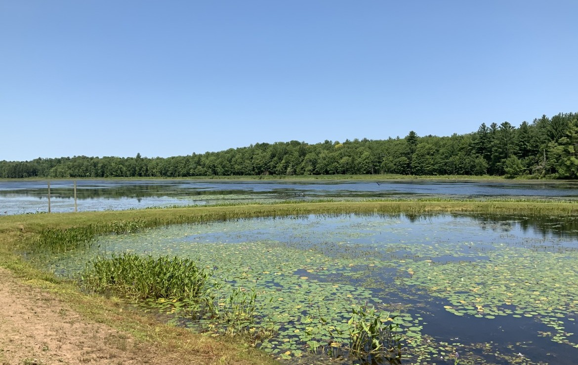 Carterville Pond and Panther Lake!